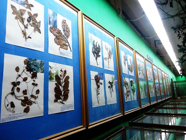 Bộ sưu tập thực vật ép khô ở Bảo tàng thành phố Cần Thơ.